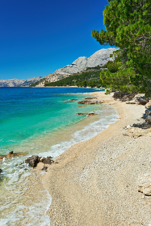 Foto de Amazing Adriatic Sea bay with pines in Croatia - Imagen libre de derechos