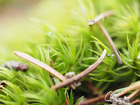 Photo for mosses and lichens on tree - Royalty Free Image