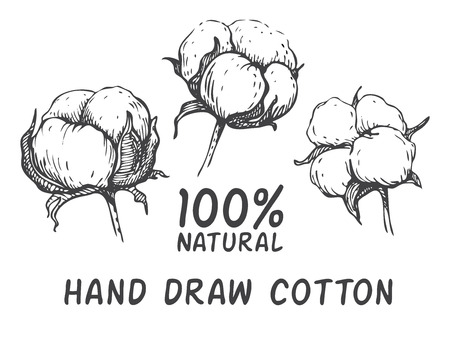 Illustration for Vector set of hand draw ink cotton plant. Engraving illustration. Can be used as decor ellement for a rustic wedding or greeting cards - Royalty Free Image