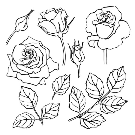 Illustration pour Vector set of hand-draw line rose collection. Flower and leaf illustration. Great for wedding invitation and greeting cards - image libre de droit