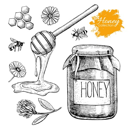 Illustration pour Vector honey set. Vintage hand drawn illustration. Engraved organic food - image libre de droit