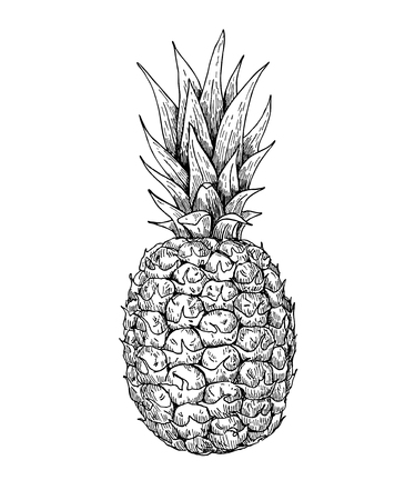 Illustration pour Vector hand drawn pineapple. Tropical summer fruit engraved style illustration. Detailed food drawing. Great for label, poster, print - image libre de droit