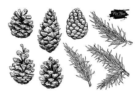 Illustration pour Pine cone and fir tree set. Botanical hand drawn vector illustration. Isolated xmas pinecones. Engraved collection. Great for greeting cards, backgrounds, holiday decor - image libre de droit