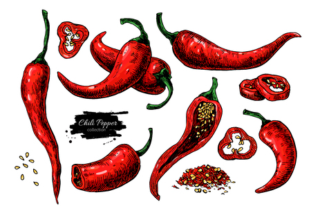 Ilustración de Chili Pepper hand drawn vector illustration. Vegetable artistic style object. Isolated hot spicy - Imagen libre de derechos