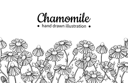 Illustration pour Chamomile vector drawing frame. Isolated daisy wild flower and leaves. Herbal engraved style illustration.Detailed botanical sketch for tea, organic cosmetic,medicine,aromatherapy - image libre de droit