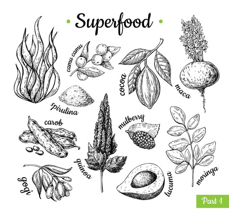 Illustration for Super food hand drawn vector illustration. Botanical isolated sketch drawing, pirulina, cocoa, quinoa carob moringa goji, maca. Organic healthy food great for banner, poster and label. - Royalty Free Image