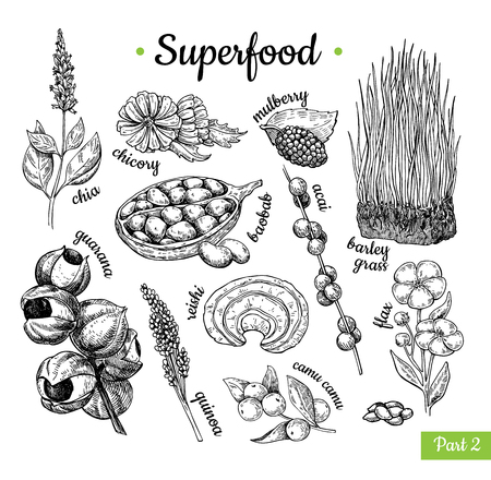 Illustration for Super food hand drawn vector illustration. Botanical isolated sketch - Royalty Free Image