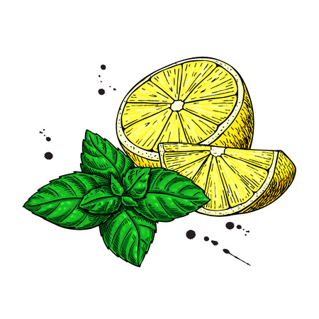 Ilustración de Lemons and mint vector drawing.  Hand drawn sliced fruit piece and leaves. Isolated on white background. Detailed illustration for mojito drink, lemonade, tea label - Imagen libre de derechos