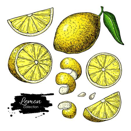 Ilustración de Lemon vector drawing. Summer fruit artistic illustration. - Imagen libre de derechos