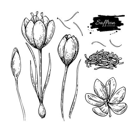 Ilustración de Saffron flower vector drawing. Hand drawn herb and food spice. - Imagen libre de derechos