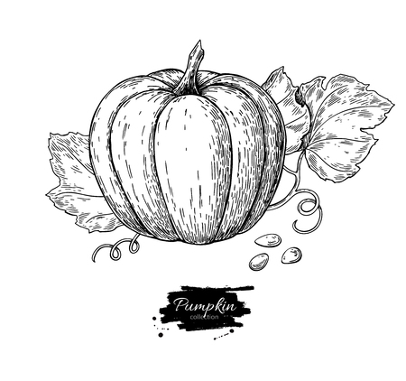 Illustration for Pumpkin vector drawing set. Isolated hand drawn object with sliced piece and leaves. Vegetable engraved style illustration. Detailed vegetarian food sketch. Farm market product. - Royalty Free Image