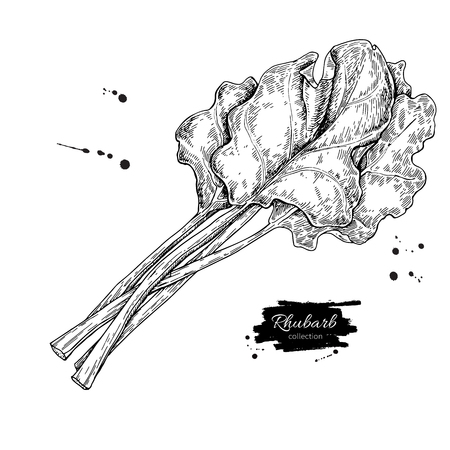 Illustration for Rhubarb vector drawing set. Isolated hand drawn sliced piece an - Royalty Free Image