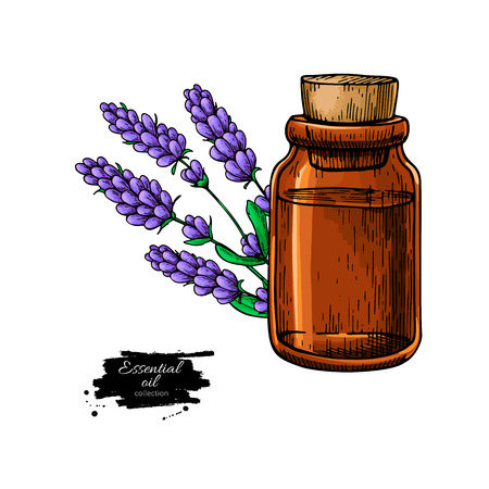 Ilustración de Lavander essential oil bottle and bunch of flowers hand drawn ve - Imagen libre de derechos