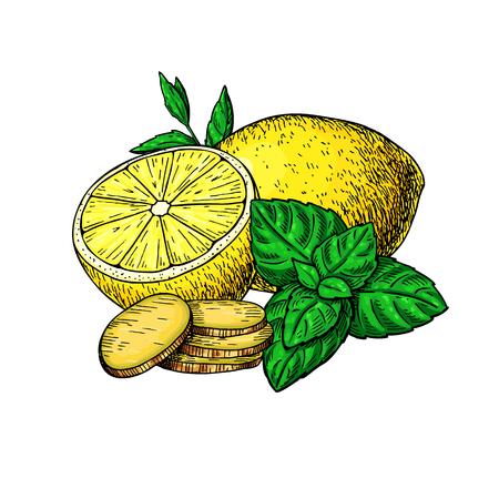 Ilustración de Lemon, mint and ginger vector drawing. Root, hearb leaf and fruit slice sketch. Illustration with tea or lemonade ingredient, alternative medicine, flu treatment. Label, icon, packaging design. - Imagen libre de derechos