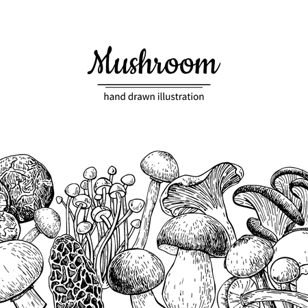 Illustration pour Mushroom hand drawn vector frame. Isolated Sketch organic food drawing template. Champignon, morel, truffle, enokitake, porcini, oyster, chanterelle, shiitake. Great for menu, label, product packaging - image libre de droit
