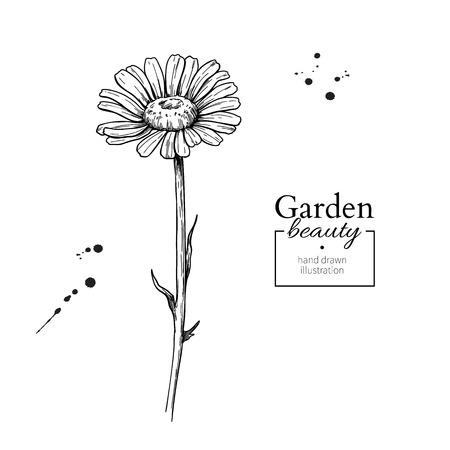 Ilustración de Daisy flower drawing. Vector hand drawn engraved floral set. Cha - Imagen libre de derechos
