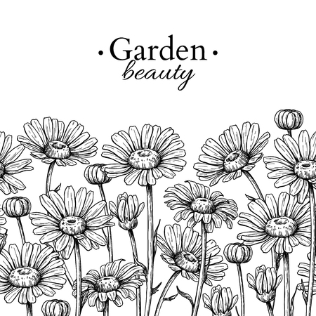 Illustration pour Daisy flower border drawing. Vector hand drawn engraved floral seamless pattern. Chamomile black ink frame sketch. Wild botanical garden bloom. Great for tea packaging, label, icon, greeting cards, - image libre de droit