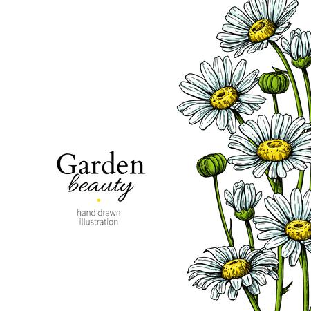 Ilustración de Daisy flower border drawing. Vector hand drawn floral frame. Chamomile - Imagen libre de derechos