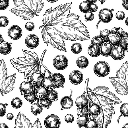 Illustration for Black currant seamless pattern. Vector drawing. Isolated berry branch sketch on white background. - Royalty Free Image