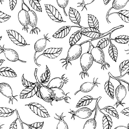 Illustration pour Rosehip seamless pattern. Vector drawing. Berry branch sketch on white background. - image libre de droit