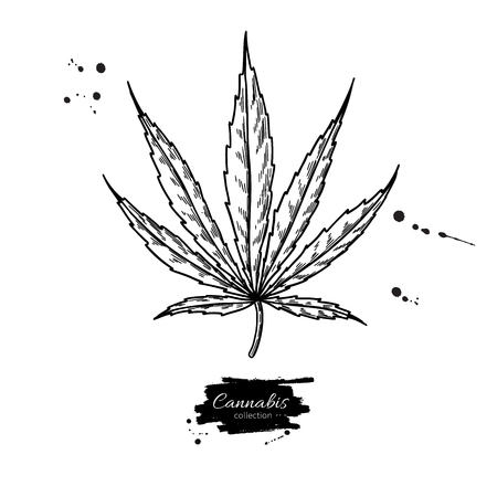 Illustration pour Marijuana leaf vector drawing. Cannabis botanical illustration. Hemp plant sketch. Medical drug. Engraving style object isolated on white background. Great for shop label, emblem, sign, packaging - image libre de droit