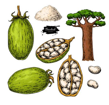 Ilustración de Baobab vector super food drawing. - Imagen libre de derechos