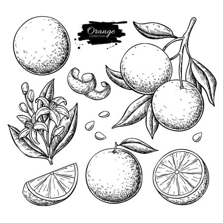 Ilustración de Orange fruit  drawing set - Imagen libre de derechos