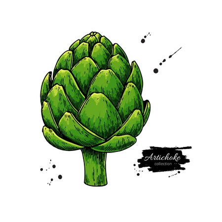Illustration for Artichoke hand drawn - Royalty Free Image