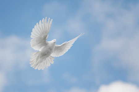 Photo for White dove flying against the blue sky with clouds - Royalty Free Image