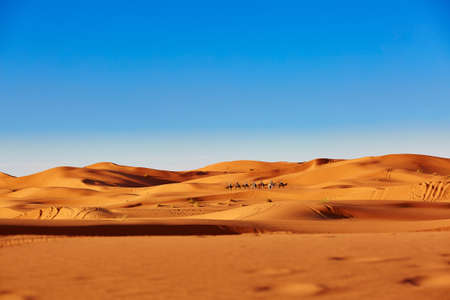 Foto de Camel caravan going through the sand dunes in the Sahara Desert, Merzouga, Morocco - Imagen libre de derechos