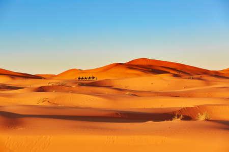 Photo for Camel caravan going through the sand dunes in the Sahara Desert, Merzouga, Morocco - Royalty Free Image