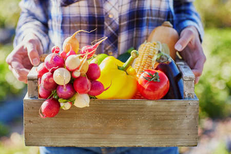 Woman holding wooden crate with fresh organic vegetables from farm
