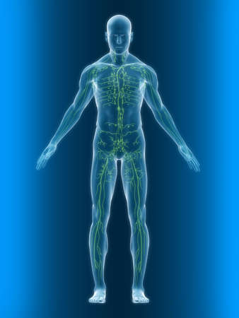 Foto de transparent body with healthy lymphatic system - Imagen libre de derechos