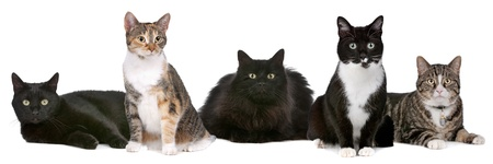Group of cats in front of a white background