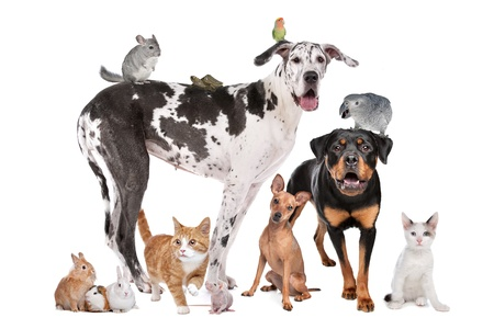 Group of Dogs, cats, birds,mammals and reptiles in front of a white background