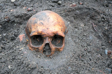 Photo for Archaeological excavation with old antique skull still half buried in the ground. - Royalty Free Image