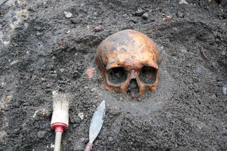 Photo for Archaeological excavation with skull still half buried in the ground and tools lying beside - Royalty Free Image