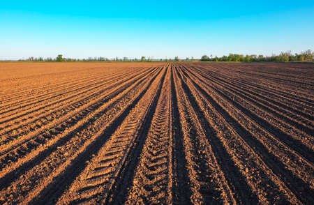 Foto per Preparing field for planting. Plowed soil  in spring time with blue sky.  - Immagine Royalty Free