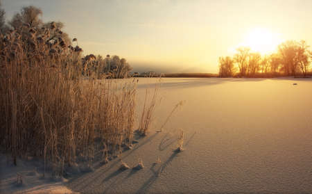 Photo pour Beautiful winter landscape. The branches of the trees are covered with hoarfrost. Foggy morning sunrise. Colorful evening, bright sunshine over a river or lake. - image libre de droit
