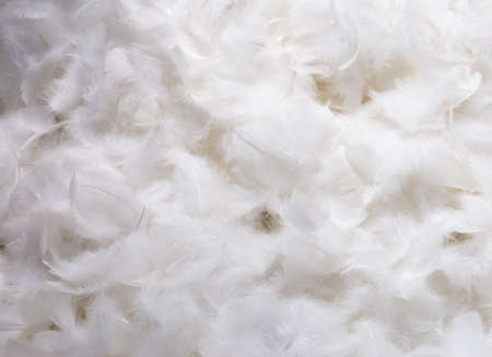 Foto de Close-Up of Pile of White Fluffy Feathers - Imagen libre de derechos