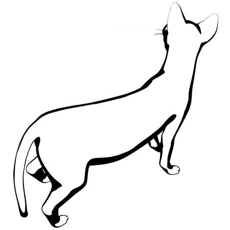 Illustrazione per Cat sketch on a white background. Sphynx silhouette vector, pet illustration - Immagini Royalty Free