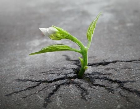 Photo pour Little flower sprout  grows through urban asphalt ground - image libre de droit