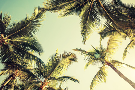 Photo for Coconut palm trees over bright sky background. Vintage style. Toned photo with filter effect - Royalty Free Image