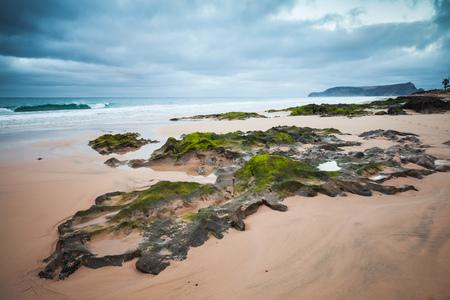 Foto de Wet coastal stones with green seaweed on the beach of Porto Santo island, Madeira archipelago, Portugal - Imagen libre de derechos