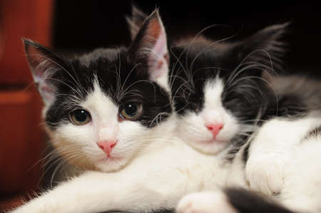 two black and white cat lying