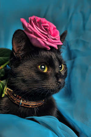 Black cat with a rose
