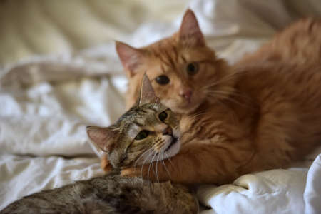 Photo for Friendship of the two  cats, orange and grey - Royalty Free Image