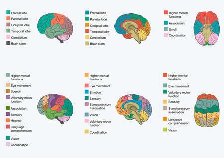 Illustration pour Human brain anatomy, function area, mind system - image libre de droit