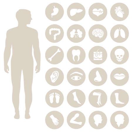 Illustration pour anatomy human body parts, organs vector medical icon, - image libre de droit