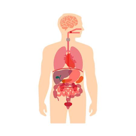 Illustration pour human body anatomy, medical organs vector system, - image libre de droit